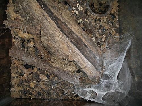 Tarantula Terrarium Makeover