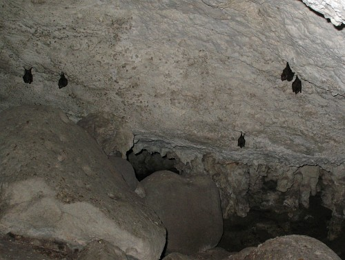 bat flying out of cave